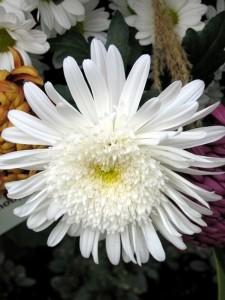 Ostatnie kwiaty jesieni