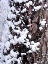 Winter 2010 067