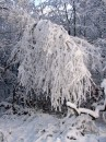 Winter 2010 068