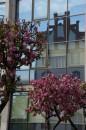 Wiosna nad Młynówką